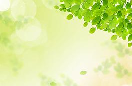 好看的小清新春天绿叶背景