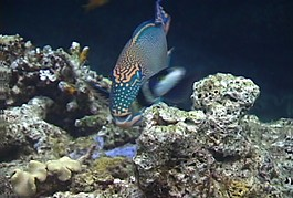 海底世界高清視頻素材素材下載