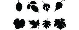 树叶矢量图