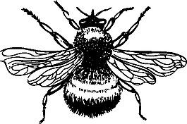 大黃蜂的剪輯藝術