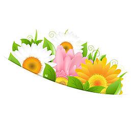 花朵 花边