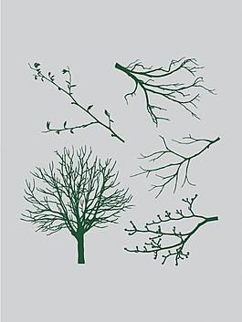 树干 树枝 树叶图片