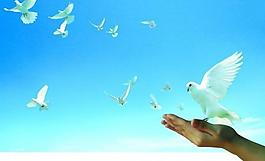 和平鸽 为民办实事 手 和平鸽 古塔 稻田 天空 寓意 做好事图片