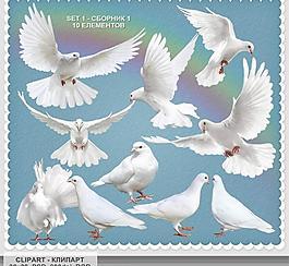 白鴿psd素材圖片