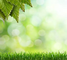 綠色樹葉草地背景