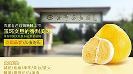 文旦 柚子 玉環圖片
