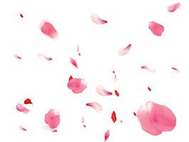 花瓣素材大圖psd圖層