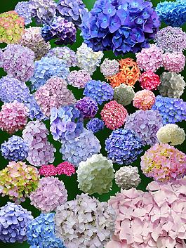 小花花簇分层花朵大绣球花分层PSD素材