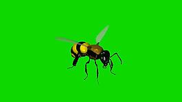 蜜蜂绿屏抠像视频素材