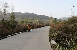 少林景区图片