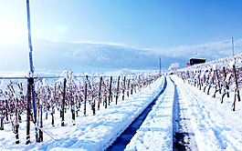 雪地背景背景素材