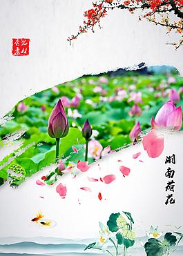 湖南荷花  荷花   水墨画 中国风