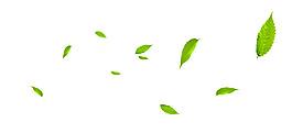 树叶漂浮元素