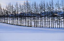 雪地樹林背景圖
