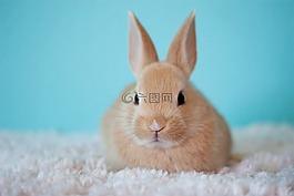 可爱,婴儿,兔子