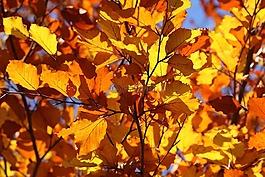 叶,叶子,黄色