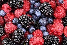 背景,漿果,黑莓