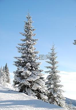 冬天,雪,樹