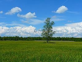 樹,景觀,草地
