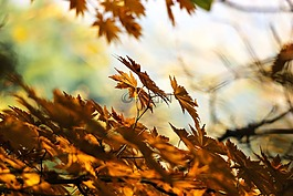 秋季,叶,秋天的树叶