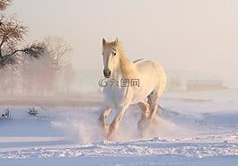 圣誕節,冬天,雪