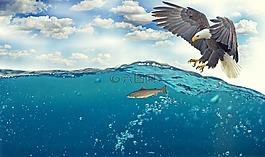 白尾鷹,阿德勒,禿頭鷹