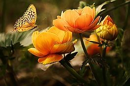 鲜花,背景,蝴蝶