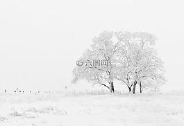 冬天,自然,季節