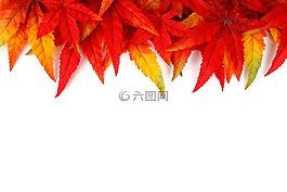 抽象,秋,背景
