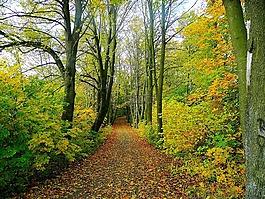 路,森林,樹