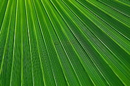 抽象,背景,植物学