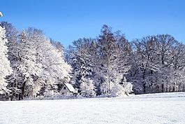 冬天,景觀,雪