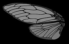 蟬,棕色的大蟬,蟬的翅膀