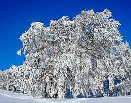 寒冬,樹木,圖書