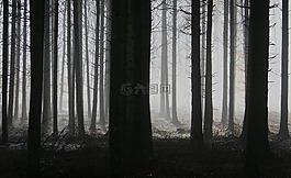 森林,樹木,霧