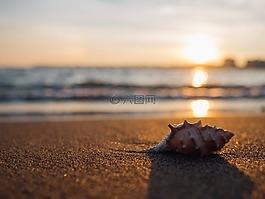 外殼,海灘,海邊