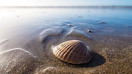 外殼,海邊,海濱