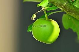 蘋果,青蘋果,樹