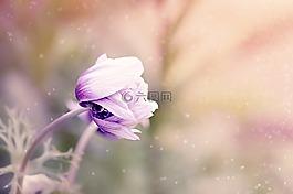 海葵,花,紫白色