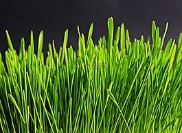 草,绿色,性质