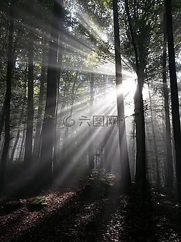 陽光,光線,太陽