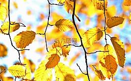 秋季,秋天的落叶,叶子