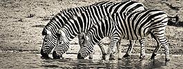 斑马,野生动物园,野生动物