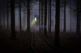 有霧,薄霧,森林