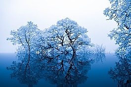 性質,靈感,樹木