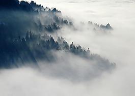 森林,霧,性質
