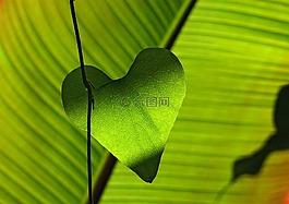 绿色,叶子,心脏
