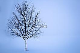 樹,雪,冬天