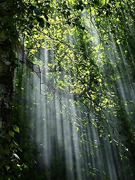 森林,陽光,樹