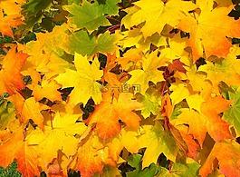 叶子,秋,秋天